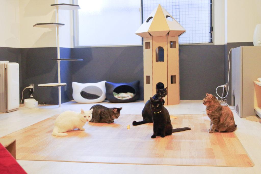 保護猫カフェ ネコリパブリック東京池袋店