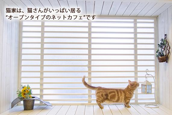 猫カフェ 猫家(ねこや)川越店