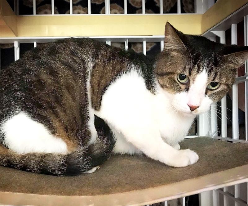 里親募集型保護猫カフェ CAT'S INN TOKYO-キャッツイン東京-