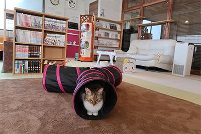 猫のいる休憩室〜谷保ねこ〜