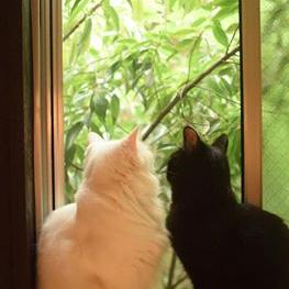 浅草の猫カフェ【カフェきゃらふ】