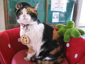 たまミュージアム貴志駅