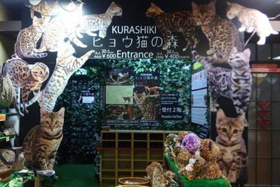 倉敷の猫屋敷/KURASHIKIヒョウ猫の森