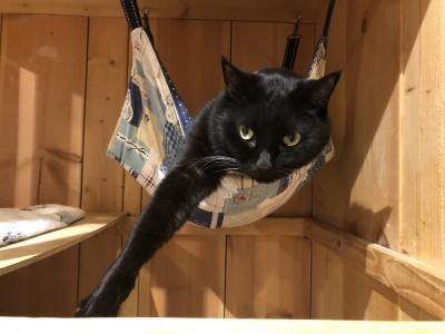 cat cafe ねこびやか -黒猫cm-