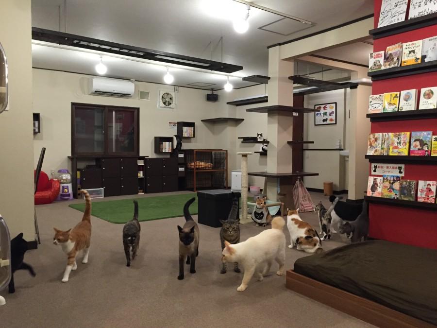 """札幌市東区の猫カフェ """"Mewkies"""" ~ミューキーズ~"""