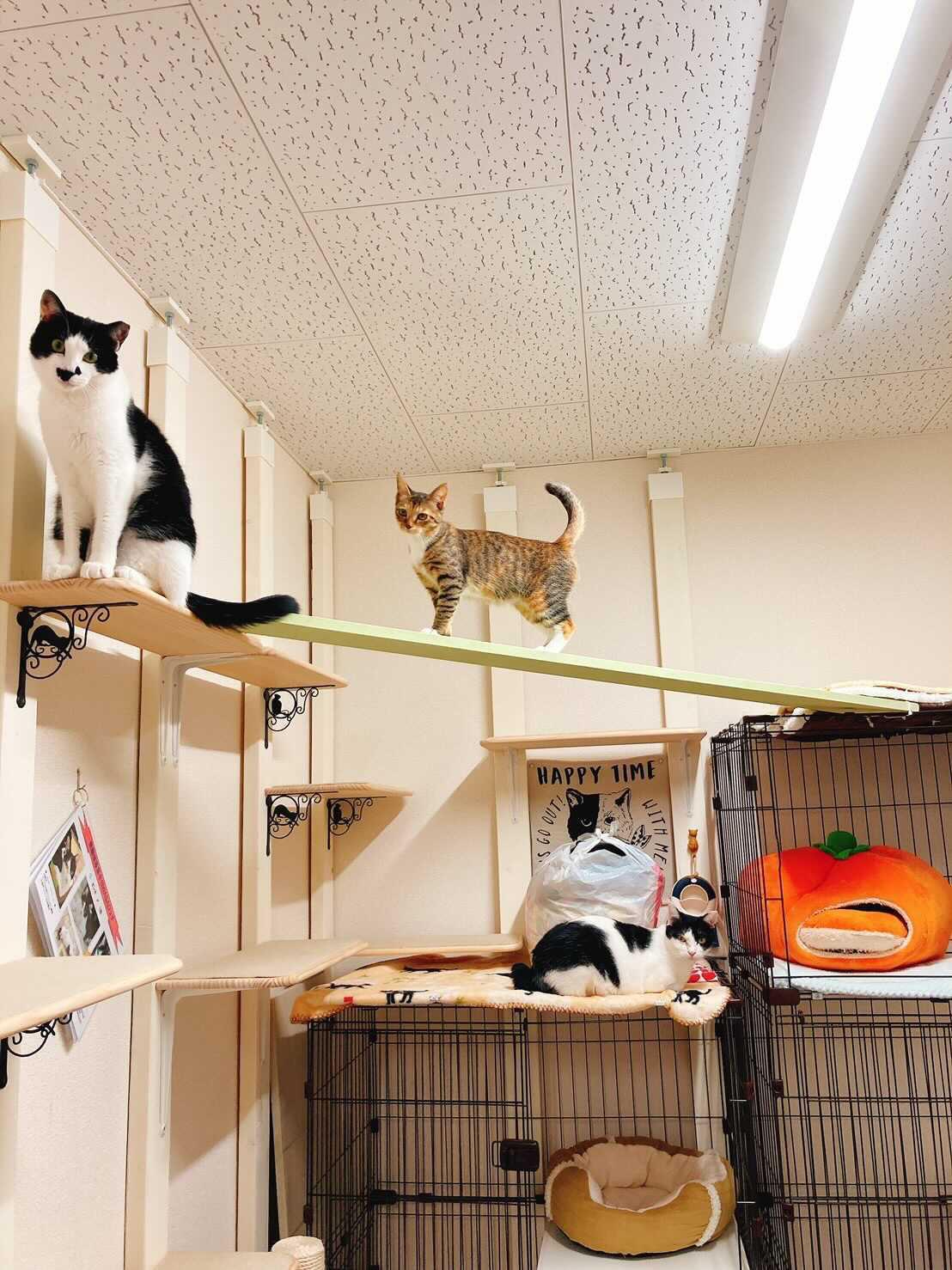 保護猫ルーム WASAO