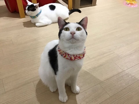 里親募集型猫カフェ  えこねこ
