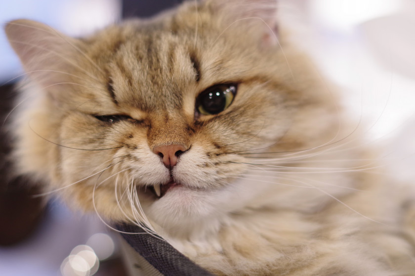 猫カフェもふにゃん