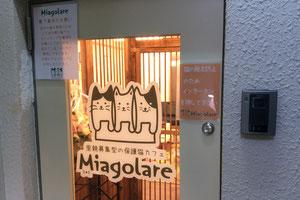 譲渡型保護猫カフェ 新中野miagolareミャゴラーレ