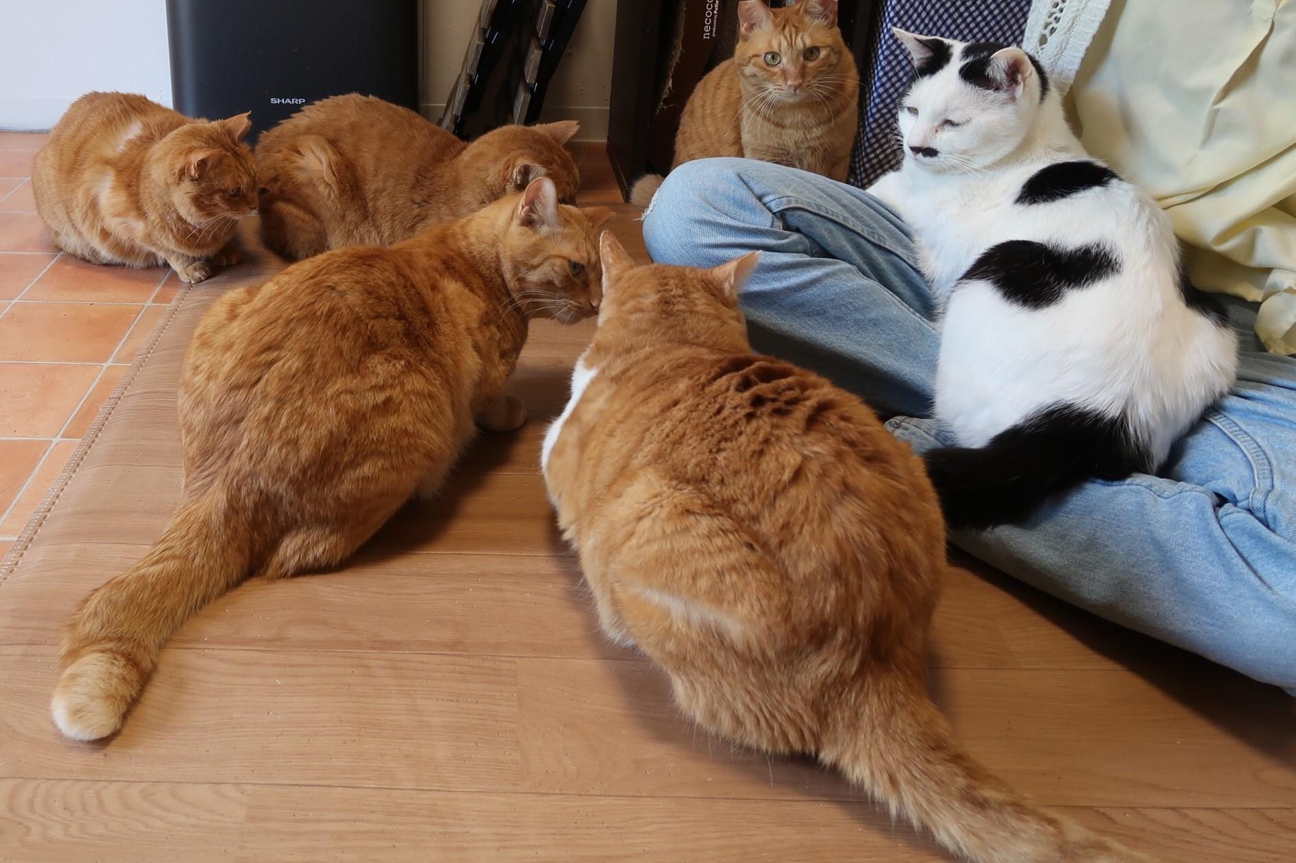 保護猫カフェCatio