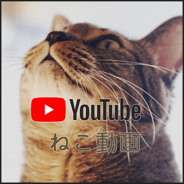 トランポリン動画集